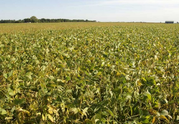 goodyear-growing-soy-field-shot5
