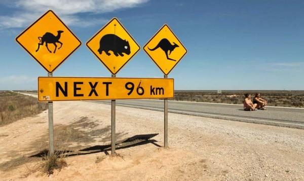 eyre highway 145 km (5)