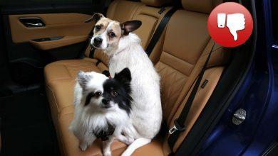 Photo of Η Nissan δίνει συμβουλές σχετικά με την Ημέρα Σκύλου στις ΗΠΑ